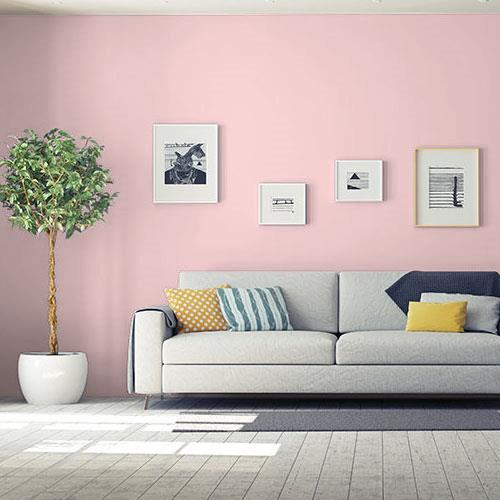 Pink Cardoon